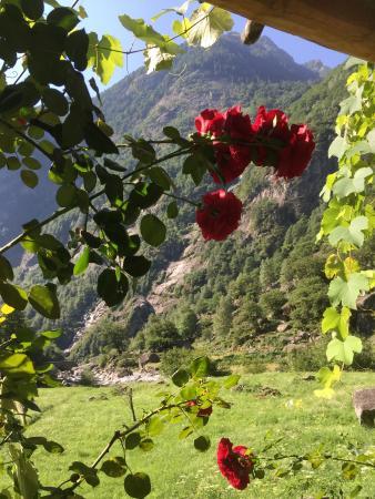 Cavergno, Switzerland: Umgebung