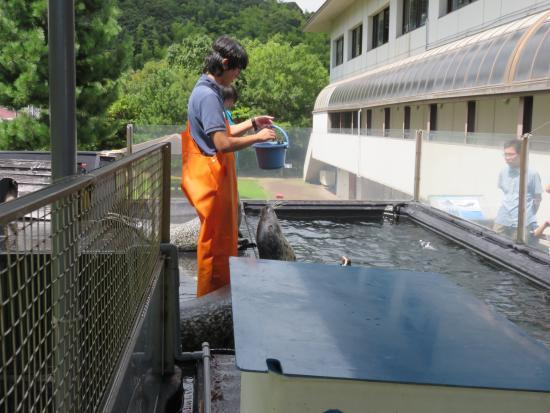 Miyazu, Nhật Bản: アザラシの餌やりです