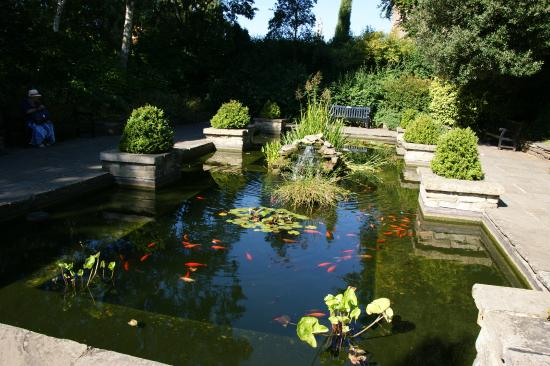 San Diego Pond and Garden - Specialists in High-Quality ...