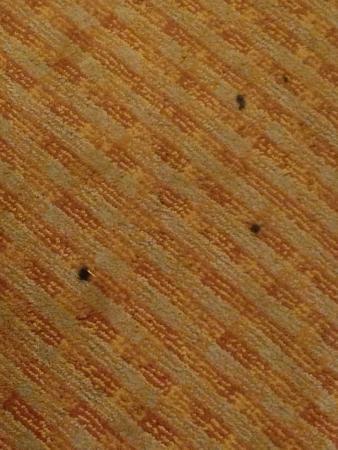 Sleep Inn at Bush River Road: cigarette burns - dirty carpet