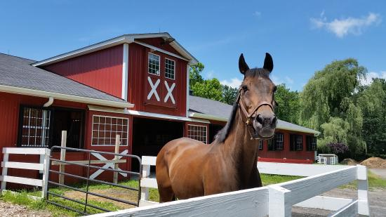 Brewster, NY: Nelson is one of several equines who call Green Chimneys home.