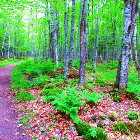 Apostle Islands, วิสคอนซิน: the forest on the island