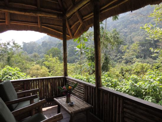 Bwindi Lodge: never loose this forrest ....