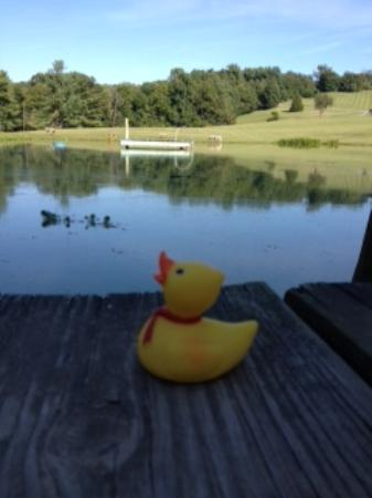 Comfort Inn Roanoke Airport: Chuck the Duck at the Duck Pond