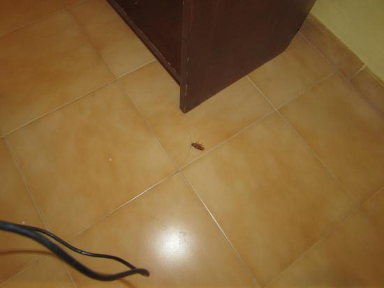 Hotel Playasol Marco Polo II: Cucaracha 3