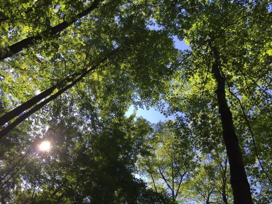 Watkins Glen State Park: photo1.jpg