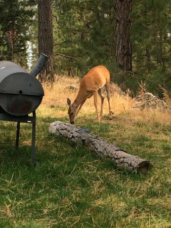 Swan Hill Bed & Breakfast: Deer