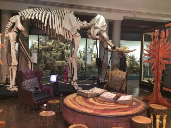 Pietermaritzburg, South Africa: Natal Museum