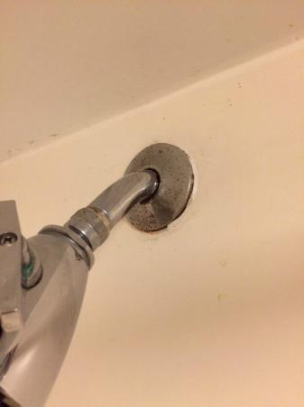 Hyatt Place Nashville/Franklin/Cool Springs: shower head. mold and rust lived happily ever after