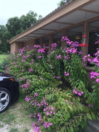 Jessieville, AR: Flowers outside that attract hummingbirds and butterflies