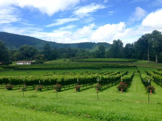 Stonewall Creek Vineyards : Views from the winery