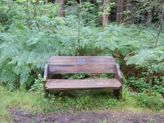 Cloghereen Blue Pool Walk : One of the benches in the park