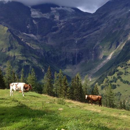 Grossglockner-Hochalpenstrasse: Carretera alpina del Grossglockner