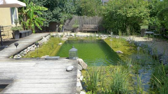 jardin d 39 eau piscine naturelle picture of les jardins d 39 eau carsac aillac tripadvisor. Black Bedroom Furniture Sets. Home Design Ideas