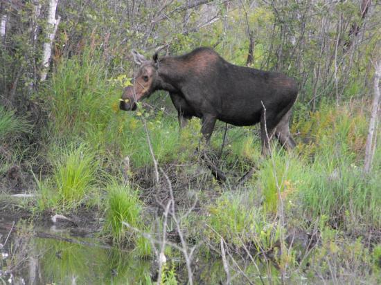 Holden, ME: Wildlife