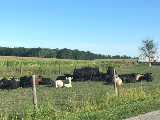Amherst, OH: Plenty of farm scenery along the route.