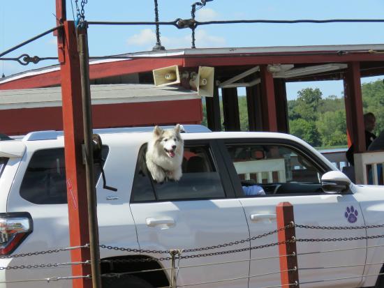 Millersburg, Pennsylvanie : Dog on the ferry.