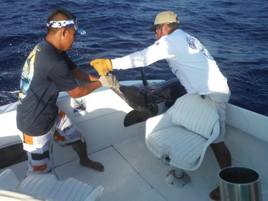 Jose and emilio getting it done picture of cabo magic for Magic sport fishing