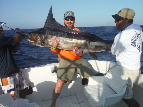 Striped marlin picture of cabo magic sportfishing cabo for Magic sport fishing