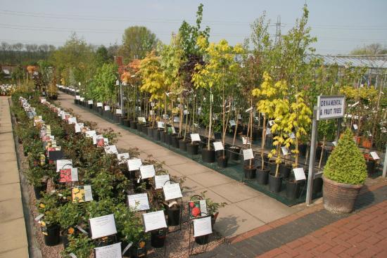 Ashwood Nurseries And John S Garden Outdoor Area Roses Trees