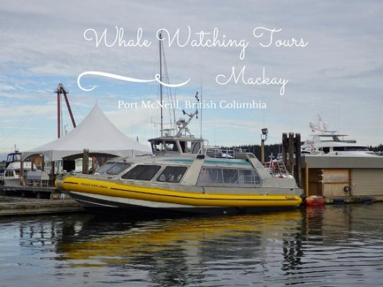 Mackay Whale Watching Tour Vessel