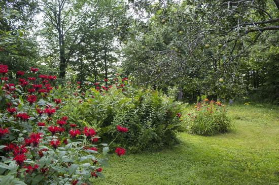 Mount Holly, VT: Another lovely garden