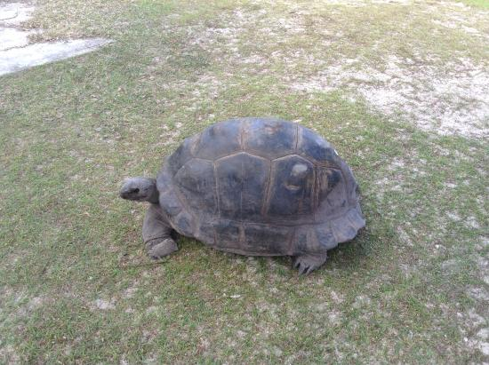 Praslin, Seychellen: ...