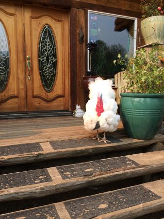 Beaver, Oregón: Romeo the Turkey greeter