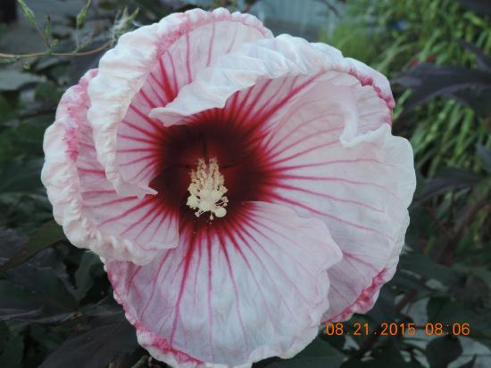 Sun and Surf Bed and Breakfast : Landscape flowers