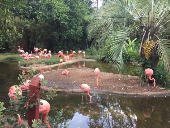 Picture Of Riverbanks Zoo And Botanical Garden Columbia Tripadvisor