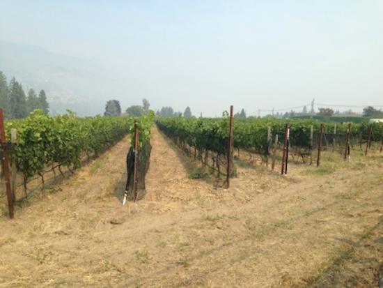 West Kelowna, Kanada: Vineyards