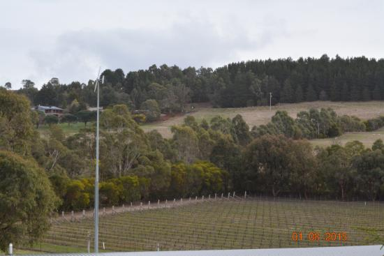 Gisborne Peak Winery Eco-Cottages: a view from the fernery