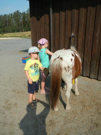 Waldhotel Bächlein: rent a Pony
