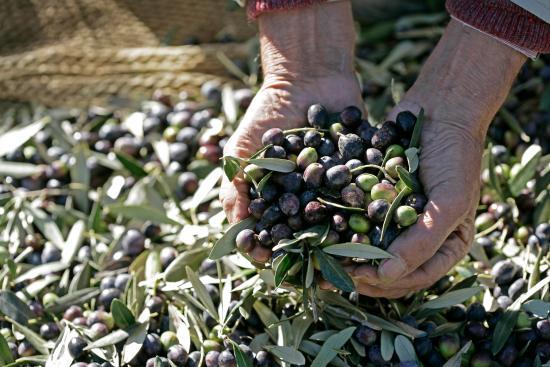 Montalbano Agricola Alimentare Toscana