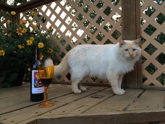 Bear Creek Winery and Lodging: there were signs not to let this cat into the room.  The cat is friendly and acts like he owns t