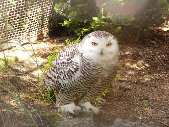 Be Chouette chouette - zoo lille - picture of lille zoo, lille - tripadvisor