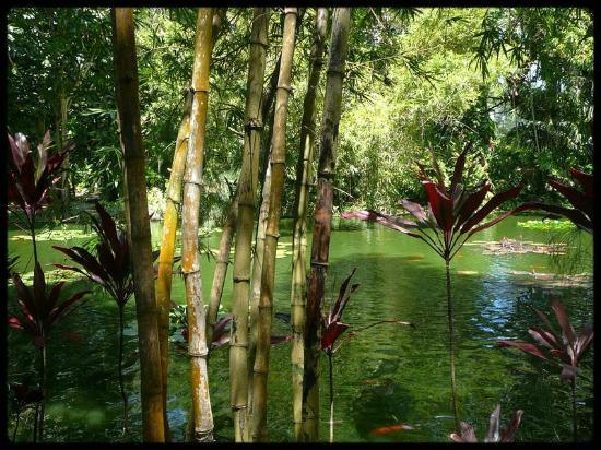 Les explorateurs picture of jardin botanique de deshaies for Jardin botanique deshaies