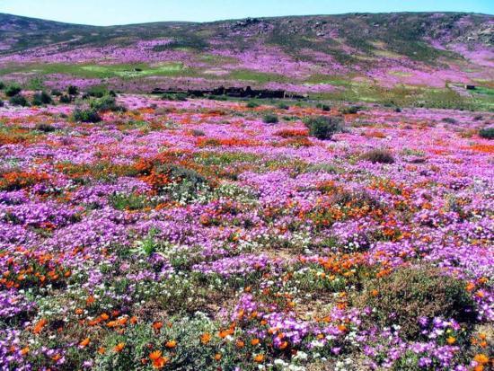 Namaqualand: Stunning