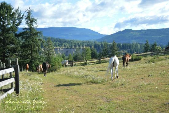 Vavenby, Canada: The horses on the ranch
