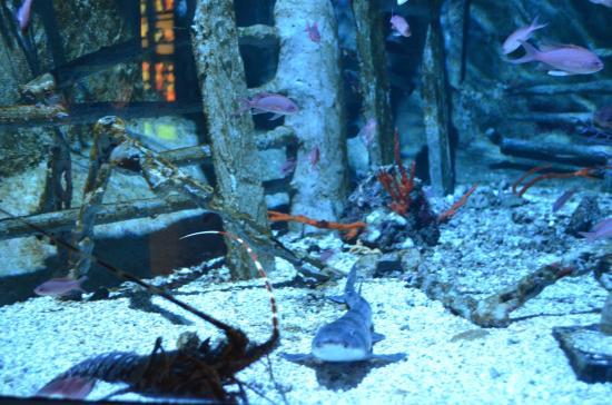 Aquarium de Milan: fotograf?a de Acquario civico, Milan ...