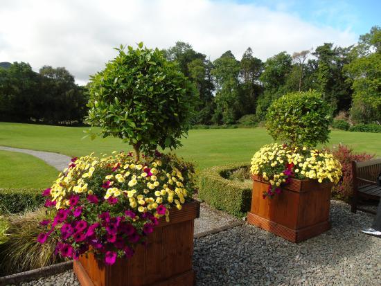 Friars Glen: lovely flowers
