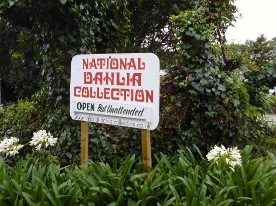 National Dahlia Collection: Go