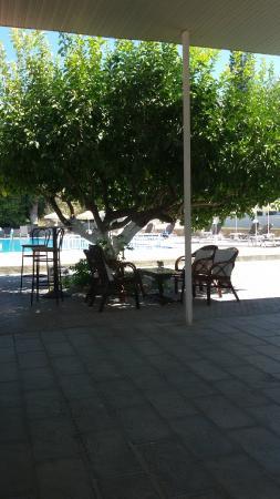 Yota Beach Hotel: Albero dei Limoni