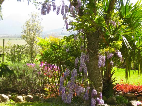 Malvern Manor Country Guest House: The Garden