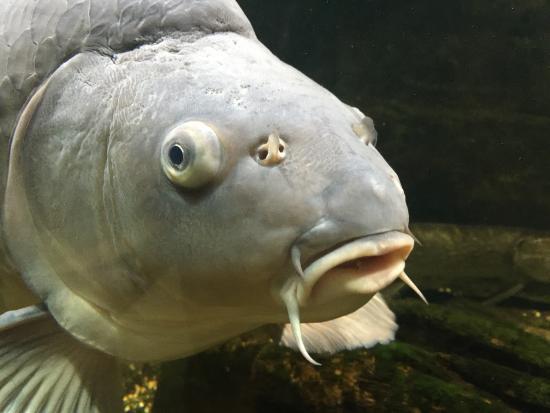 Aquarium la Maison du Saumon Et de la Riviere