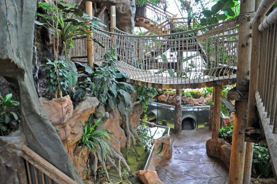 Tropenhaus Picture of Haus des Meeres Aqua Terra Zoo