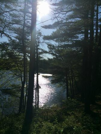 Myles Standish State Forest: Barrett's Pond through the trees