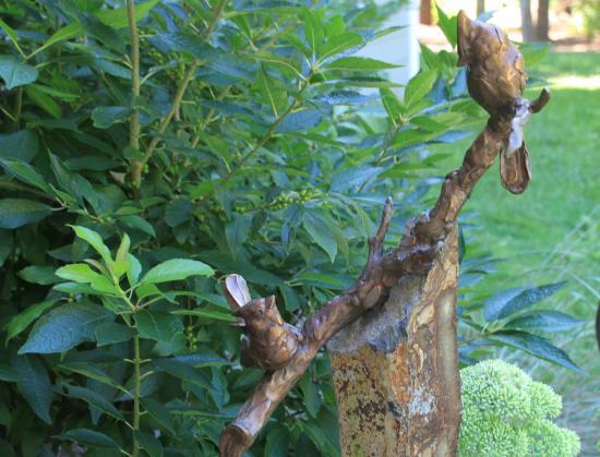 Annmarie Garden: Detail from Red Birds