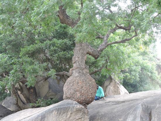 Krishna's Butter Ball: Végétation du parc