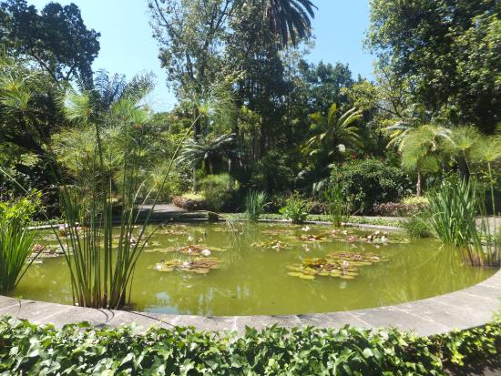 sehr schön - Picture of Botanical Gardens (Jardin Botanico), Puerto de la Cru...